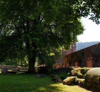 Ruine von St. Peter und Paul mit Baum im Kloster Hirsau; Foto: Stadtinformation Calw